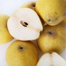 供应脆甜酥梨陕西梨陕西酥梨基地蒲城酥梨
