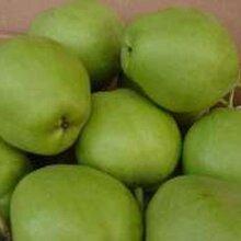 供应早酥梨基地早酥梨产地早酥梨价格批发图片