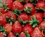 太原市草莓保鲜冷藏库厂家建设