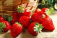 本溪市草莓保鲜冷藏库厂家建设