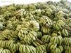鄂州市香蕉保鲜冷藏库厂家建设