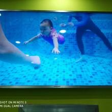 湖州贝贝鲸亲子游泳_周末亲子游泳体验课