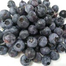 有机蓝莓鲜果图片