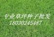 供应湖北黄冈园林草种边坡绿化草籽