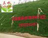 福建泉州草籽高速边坡绿化草种多少钱一斤