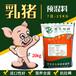 福建都在用的乳猪全价料乳猪前期配合饲料Y111贪吃猛长