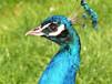 山東鴕鳥種苗多少錢一只