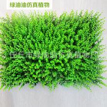 厂家热销尤加利假草坪批发仿真植物墙装饰米兰草坪质优价廉图片