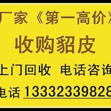 赤峰回收貂皮貂皮回收著名廠家赤峰市回收貂皮貂皮回收圖片