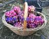 供應夏黑葡萄