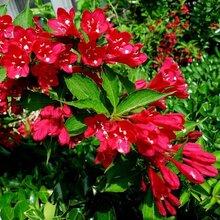 耐寒宿根花卉種類宿根花卉有哪些