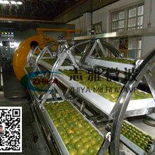 罗汉果烘干机罗汉果微波真空干燥机真空低温罗汉果烘干技术应用图片