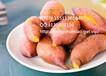 邢台烟薯14红薯多少钱邢台烟薯14红薯报价