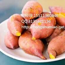 湖州龙薯9红薯报价湖州龙薯9红薯价格