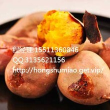 盐城龙薯9红薯报价盐城龙薯9红薯价格