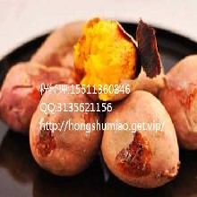 牡丹江商薯19红薯供应价牡丹江商薯19红薯采购价图片