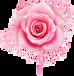 罗娜雅姿玫瑰花茶优质服务·罗娜雅姿玫瑰花茶