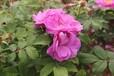 罗娜雅姿玫瑰花冠茶好喝吗?罗娜雅姿玫瑰花冠茶