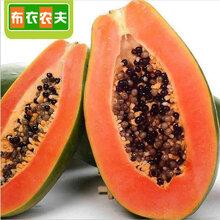 新鲜水果现摘发货8斤装海南冰糖红心木瓜青皮红心牛奶青木瓜包邮