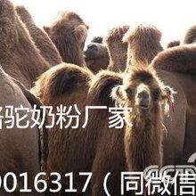 那拉乳业骆驼奶粉成人羊奶粉240g盒装厂家官方产品