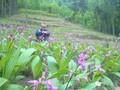 白芨种植,找武汉农梦达图片