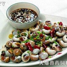 武汉田螺养殖基地图片
