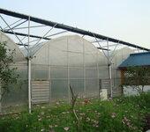 """河南日光温室建造开启""""设施农牧业+特色林果业""""的新型主体生产模式"""