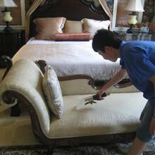 上海保洁公司为您提供上海专业沙发清洗服务图片