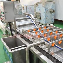 果蔬清洗机,火龙果清洗机,华钢厂家供应加工图片