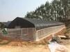河池温室大棚工程