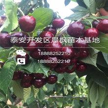 杨浦山东核桃苗批发基地图片