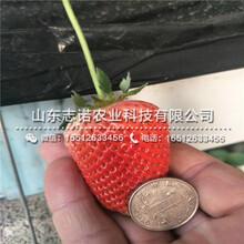 宣城中莓5号草莓1代苗多少一棵图片