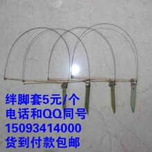 绊脚套用多大的钢丝买野鸡套绊脚套用多大的钢丝绊脚套用0.几的钢丝