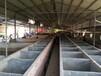 豪豬養殖批發銷售豪豬種苗湖南旺達特種養殖