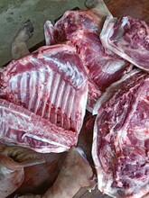 湖南巴馬香豬養殖基地香豬批發仔豬價格圖片
