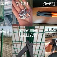 圈鸡铁丝网&养殖铁丝网&圈牛羊铁丝网&铁丝网厂家
