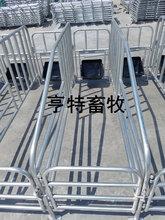 亨特畜牧主营2.16母猪定位栏带食槽母猪保胎栏厂家价格