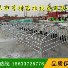 河南新乡母猪定位栏新型定位栏生产厂家