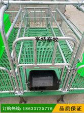 江苏宿迁母猪双体产床新型母猪产床焊接亨特放心省心