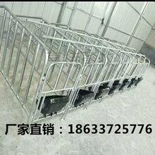 山东潍坊母猪定位栏母猪单体栏亨特畜牧现货出售