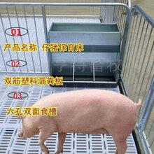 黑龙江鸡西小猪保育床塑料板复合保育床价格