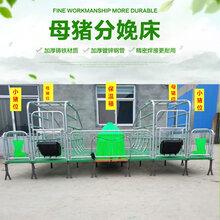 河南安阳养猪设备产床母猪产床厂家自产自销