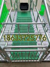 广东清远养猪设备母猪分娩产床母猪单体产床厂家