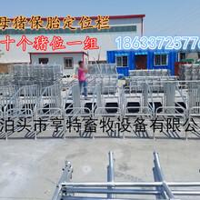 贵州遵义母猪定位栏带底定位栏厂家猪用限位栏价格