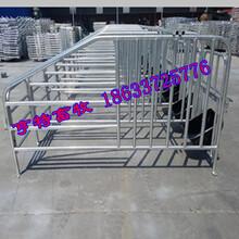 自动化养猪设备多种定位栏设备母猪限位栏厂家亨特报价