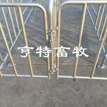 江苏淮安母猪限位栏加厚热镀锌管焊接上架亨特定位栏价格