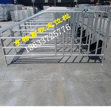 湖南怀化猪场母猪定位栏10猪位限位栏亨特全国发货