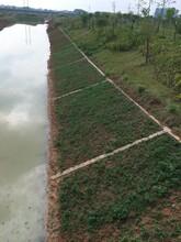 生态绿化混凝土植生生态混凝土护坡护岸中小河流治理省钱
