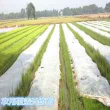 防水农用育秧水果保护袋用无纺布抗老化PP纺粘聚丙烯无纺布图片
