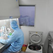 MLTC-1复苏传代细胞系图片